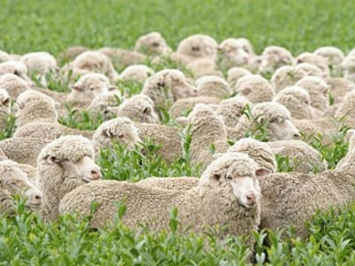 Δραπέτευσαν ντυμένοι ως… πρόβατα! | Newsit.gr
