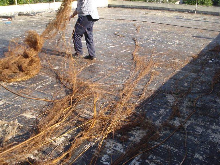 Συκιά με ρίζες για… Γκίνες στον Αστακό! ΦΩΤΟ   Newsit.gr