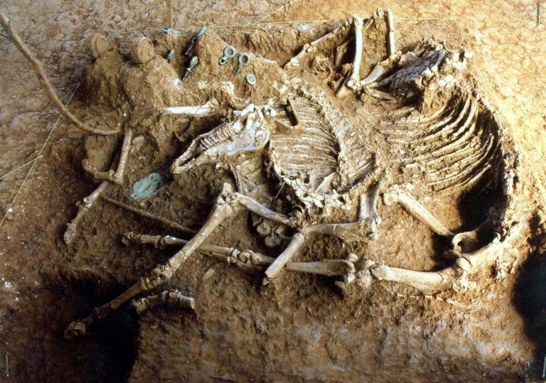 Βρήκαν ανθρώπινο σκελετό σε σταύλο! | Newsit.gr