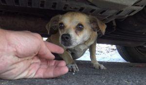 Αυτό το σκυλάκι είχε χαθεί στην πόλη για μέρες – Δείτε στο 4:30 την στιγμή της επανασύνδεσης με τον ιδιοκτήτη του (vid)