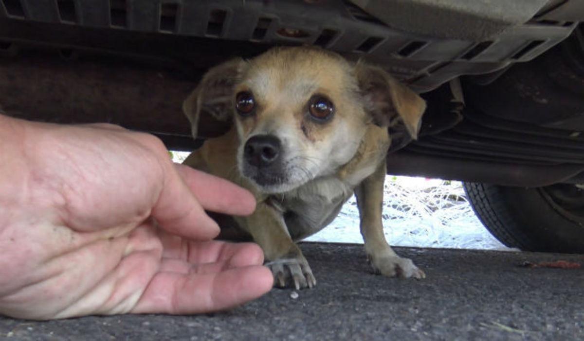 Αυτό το σκυλάκι είχε χαθεί στην πόλη για μέρες – Δείτε στο 4:30 την στιγμή της επανασύνδεσης με τον ιδιοκτήτη του (vid) | Newsit.gr