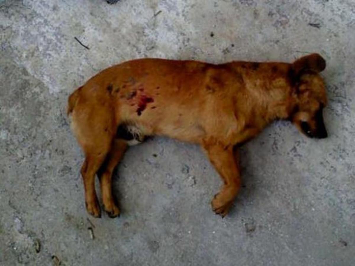 Λέσβος: Εκτέλεσε το σκύλο μπροστά στα μάτια του ιδιοκτήτη του! | Newsit.gr