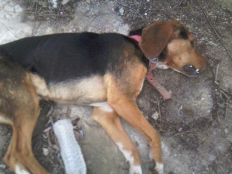 Γκλέτσος: «Να σκοτώνεις ζώα είναι αποτρόπαια και καταδικαστέα πράξη» | Newsit.gr