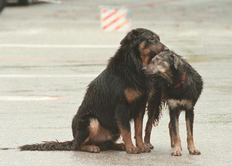 Απίστευτη κτηνωδία! Οικογένεια στο Αρκαλοχώρι σκότωνε και έτρωγε σκυλιά | Newsit.gr