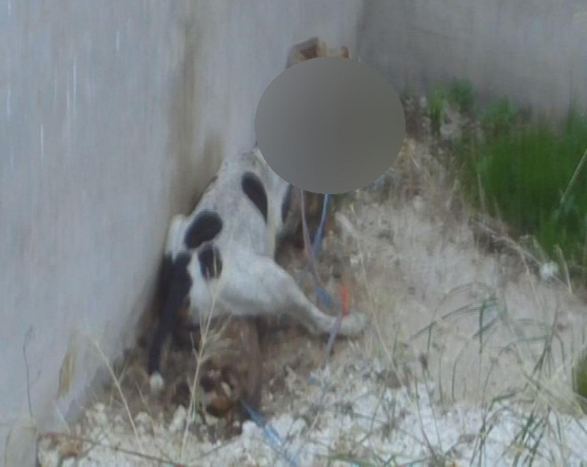 Αχαϊα: Φωτογραφία φρίκης – Κρέμασε 3 σκυλιά σε σιδερόβεργα! | Newsit.gr