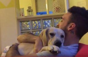 Αυτό το σκυλάκι ζητάει απεγνωσμένα συγχώρεση! [vid]