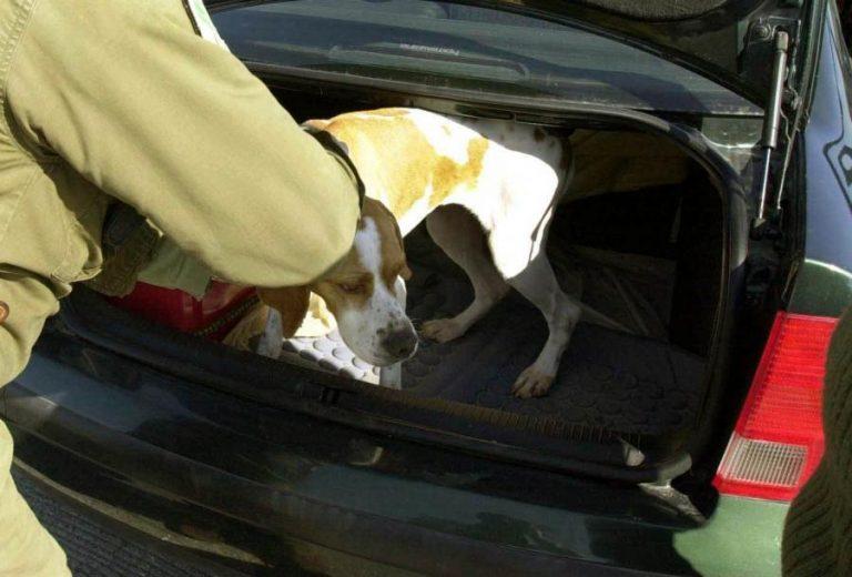 Κρήτη: Κλέβουν κυνηγόσκυλα και τα μοσχοπουλάνε | Newsit.gr