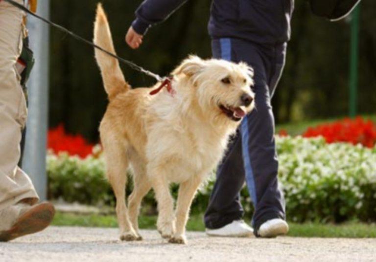 Πρόστιμο σε όσους βγάζουν το σκύλο τους βόλτα! | Newsit.gr