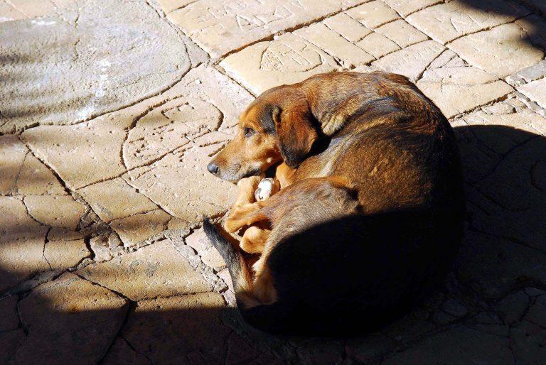 Το σχέδιο νόμου για τα αδέσποτα ζώα – Όλες οι ρυθμίσεις | Newsit.gr