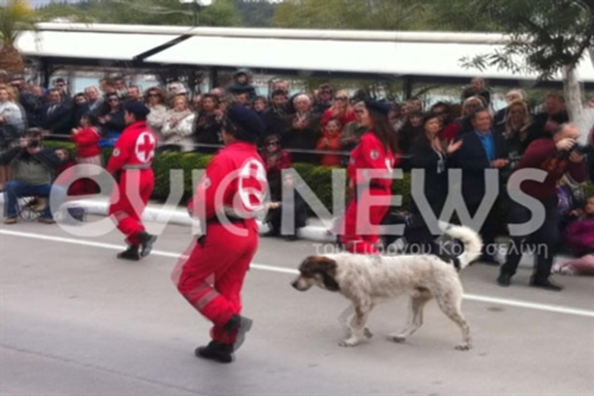 Χαλκίδα: Ο πρωταγωνιστής της παρέλασης ήταν… τετράποδος – Φωτό και βίντεο! | Newsit.gr