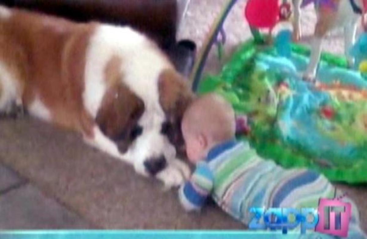 ΔΕΙΤΕ μωράκια και σκυλάκια σε τρυφερές στιγμές! | Newsit.gr