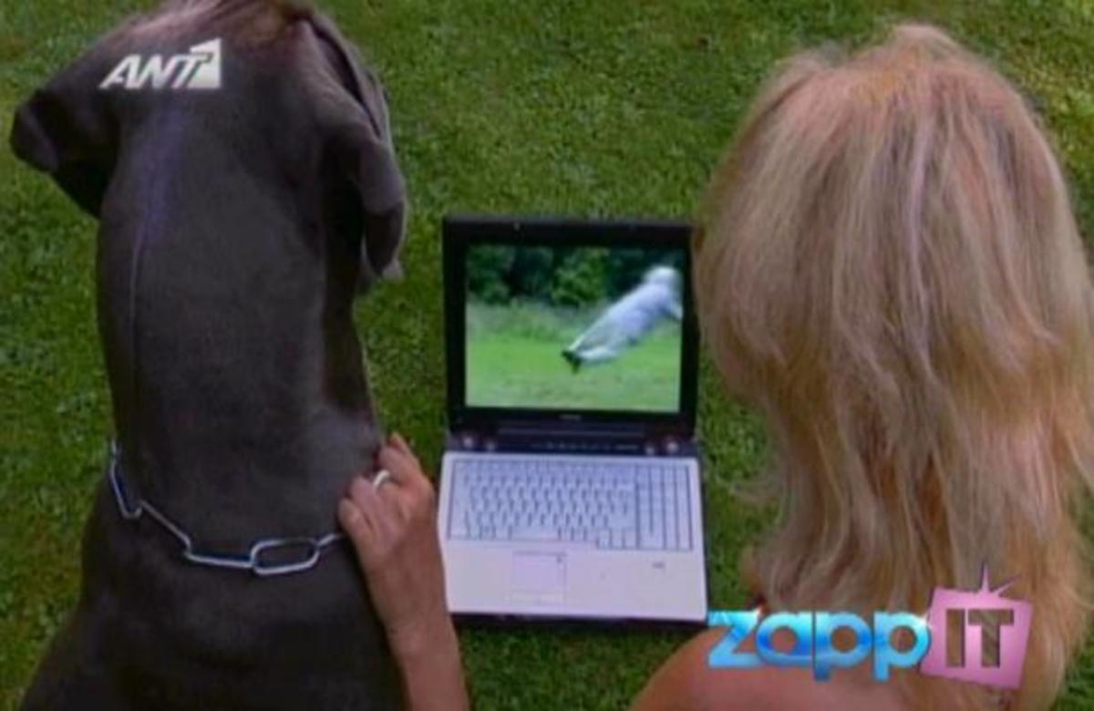 Αλήθεια ή ψέμα; Μπορεί να σηκώσει ένας σκύλος έναν άνθρωπο στον αέρα;   Newsit.gr