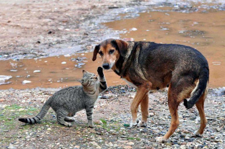Κιλκίς: Δηλητηρίασαν με φόλα οκτώ σκύλους και δύο γάτες! | Newsit.gr