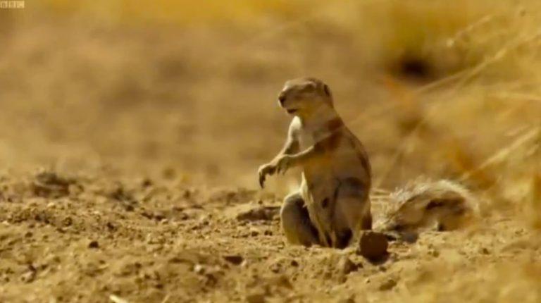 Η ξεκαρδιστική αντίδραση ενός σκίουρου μπροστά στην… λεοπάρδαλη! (VIDEO) | Newsit.gr