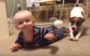 Σκυλάκι δείχνει στο 5 μηνών μωράκι πώς να μπουσουλήσει! [vid]