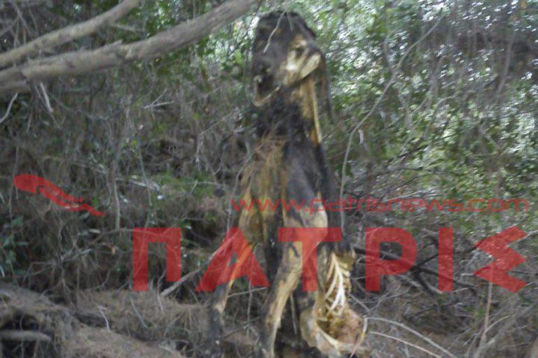 Ηλεία: Η φωτογραφία του αίσχους – Κρέμασε σκυλί σε δέντρο και το άφησε να πεθάνει! | Newsit.gr