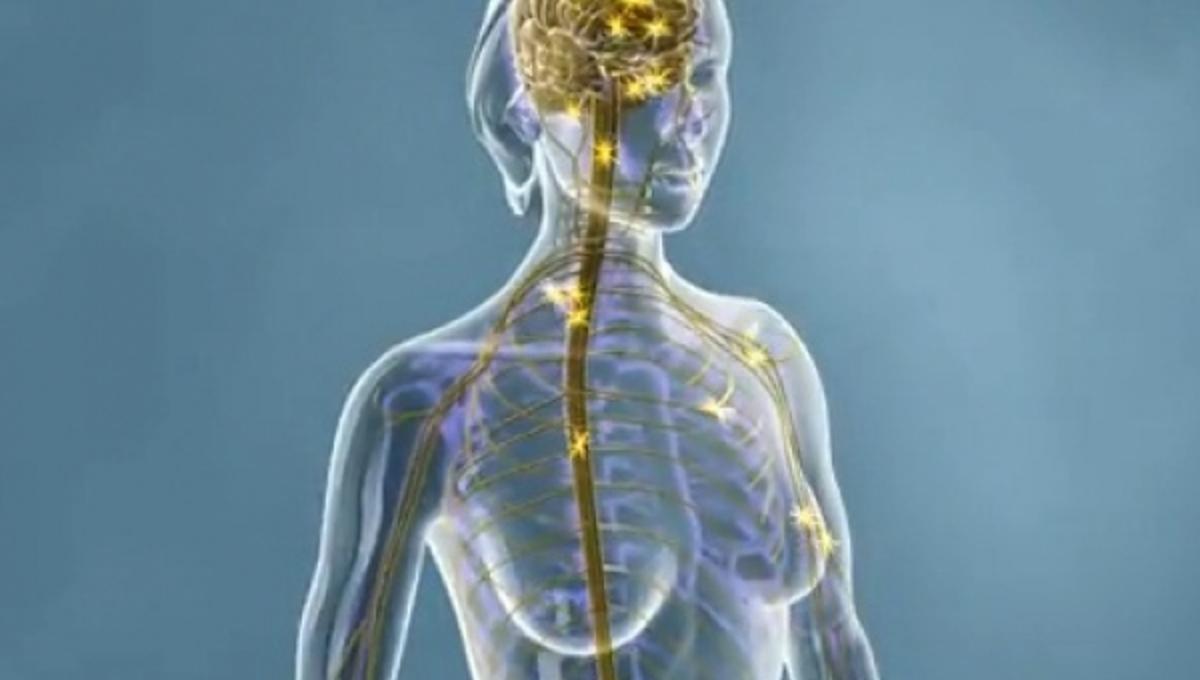Σκλήρυνση κατά πλάκας: δείτε πως χτυπάει το νευρικό σύστημα-ΒΙΝΤΕΟ | Newsit.gr