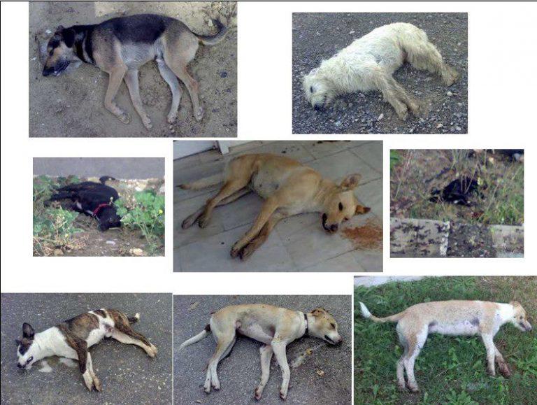 Εικόνες ντροπης με νεκρά σκυλιά στο Πανεπιστήμιο Κρήτης | Newsit.gr