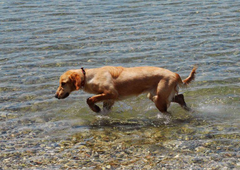 Λάρισα: Συνταξιούχος πυροβόλησε σκυλιά | Newsit.gr