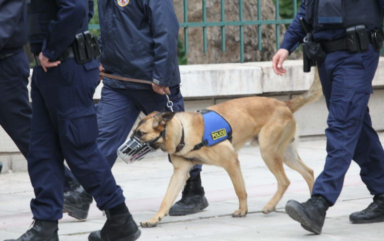 Χίος: Ο σκύλος βρήκε τα ναρκωτικά | Newsit.gr