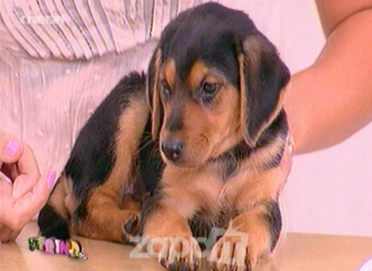 Ανεγκέφαλοι πέταξαν το σκυλάκι στα σκουπίδια! Έξαλλη η Φαίη Σκορδά!   Newsit.gr