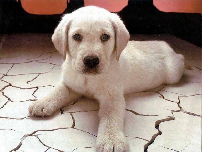 Εύβοια: Σκότωσε με καραμπίνα το σκύλο της γειτόνισσας! | Newsit.gr