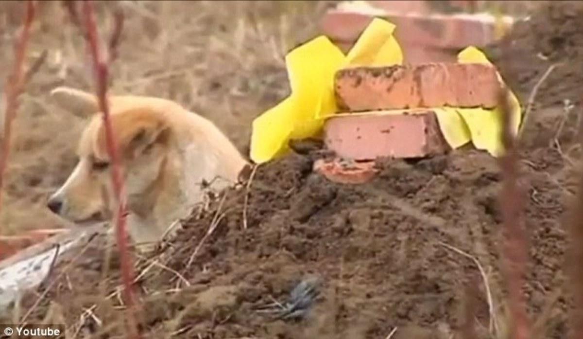 Αυτό θα πει αφοσίωση – Έμεινε νηστικός, αλλά δεν έφυγε από τον τάφο του αφεντικού του (Video) | Newsit.gr