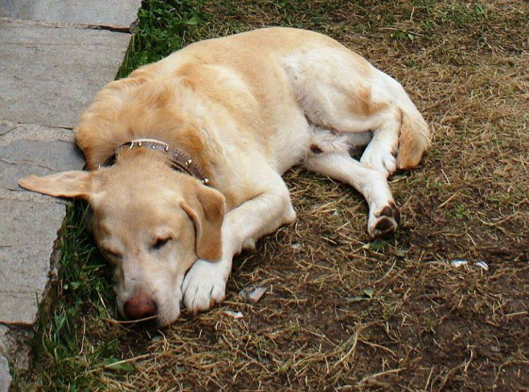 Καβάλα: Βασάνισε σκύλο μέχρι θανάτου | Newsit.gr