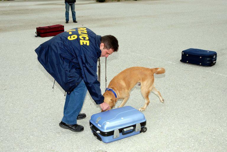 Κεφαλονιά: Ο σκύλος τους οδήγησε στο τμήμα… | Newsit.gr