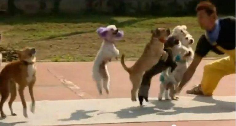 Πόσα σκυλιά πηδούν ταυτόχρονα σκοινάκι ; ΔΕΙΤΕ το παγκόσμιο ρεκόρ! | Newsit.gr