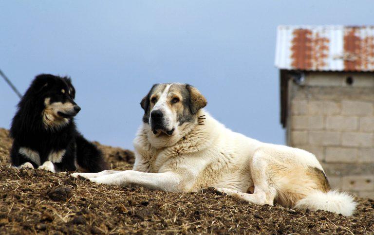 Λέσβος: Εκτέλεσαν σκυλιά έξω από στρατιωτικό φυλάκιο! | Newsit.gr