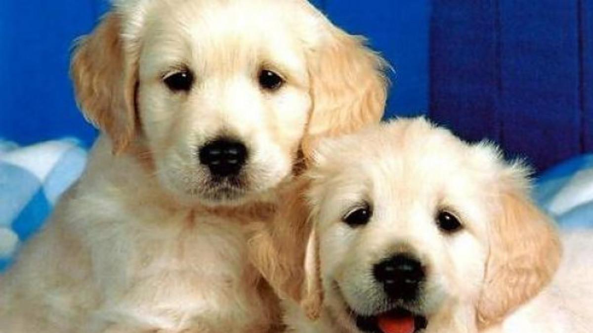 Εγκατέλειψε τα σκυλιά της σε άθλιες συνθήκες για να κάνει διακοπές στην Κύπρο!   Newsit.gr