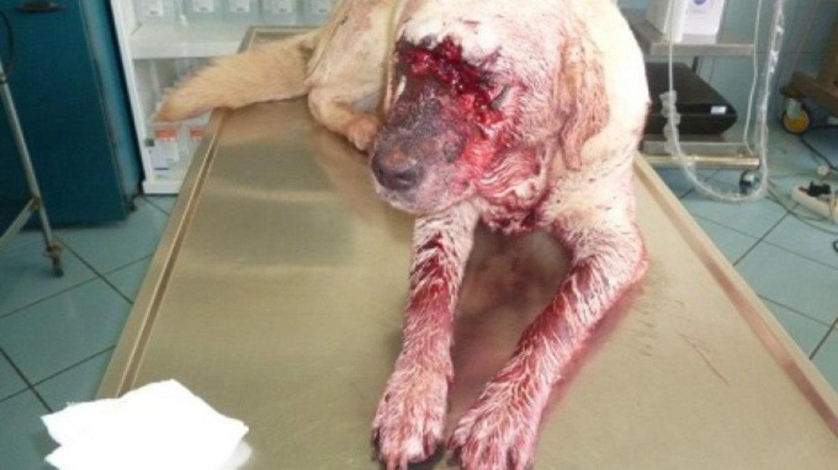 Επικήρυξαν το δολοφόνο των δύο σκύλων στο Ηράκλειο | Newsit.gr