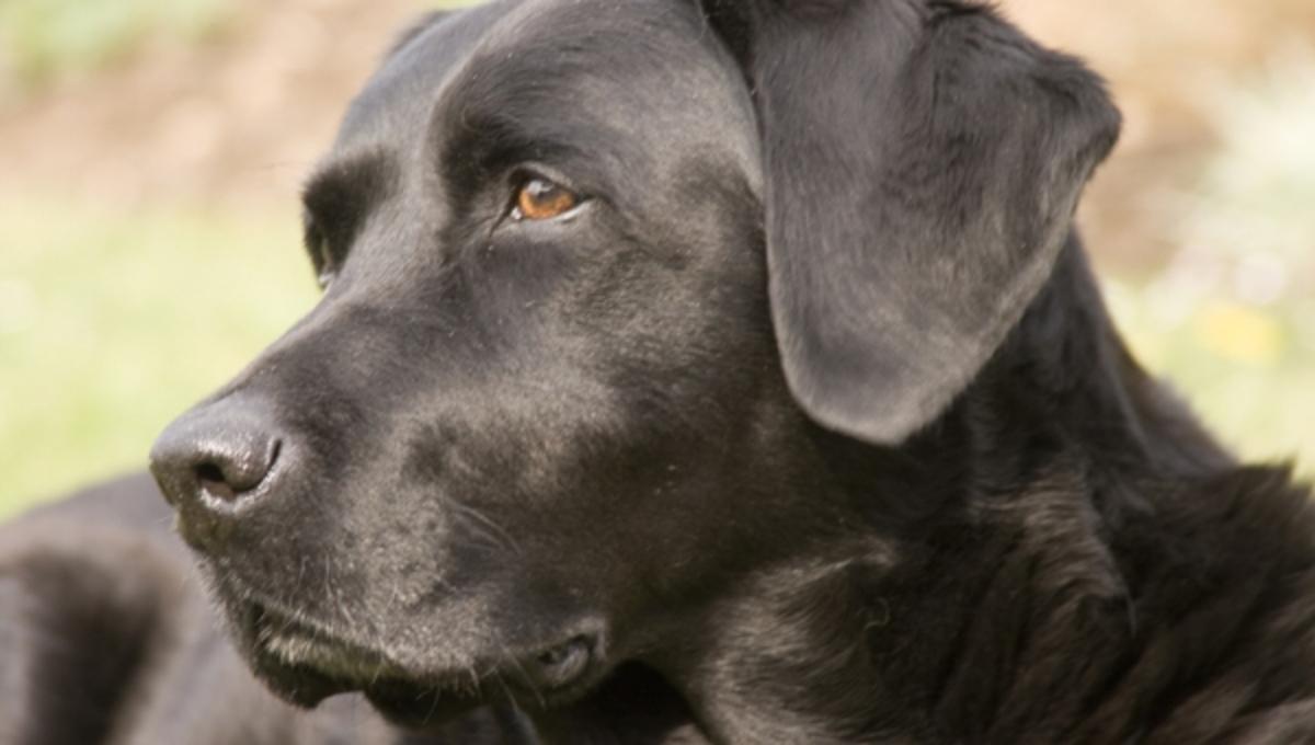 Σκυλιά εντοπίζουν τον καρκίνο | Newsit.gr