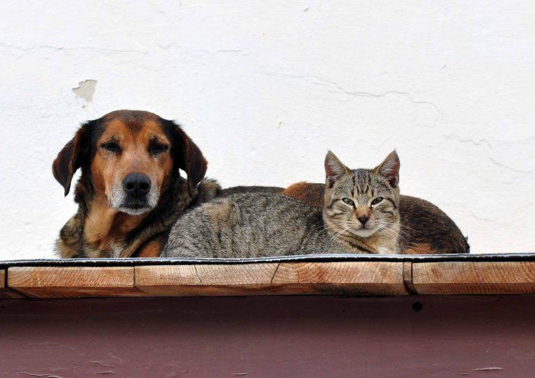 Eξοντώνουν σκυλιά και γάτες στην Κρήτη! | Newsit.gr