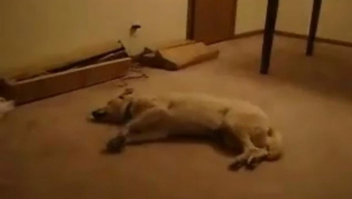 Και όμως και τα σκυλιά βλέπουν όνειρα! ΒΙΝΤΕΟ | Newsit.gr