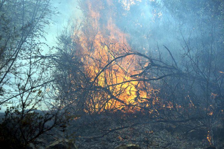 Υπο μερικό έλεγχο η πυρκαγιά στο Σοφικό Κορινθίας | Newsit.gr