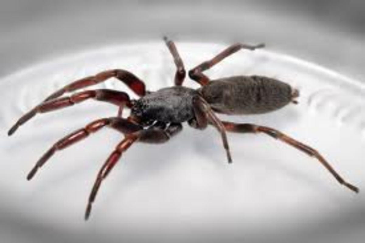 Ήθελε να σκοτώσει μια αράχνη και ανατίναξε όλο το σπίτι! | Newsit.gr