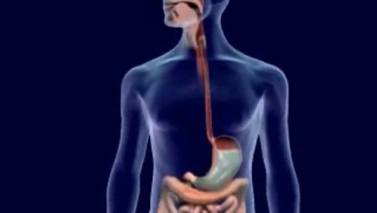 Δείτε πως λειτουργεί το πεπτικό σύστημα- VIDEO | Newsit.gr