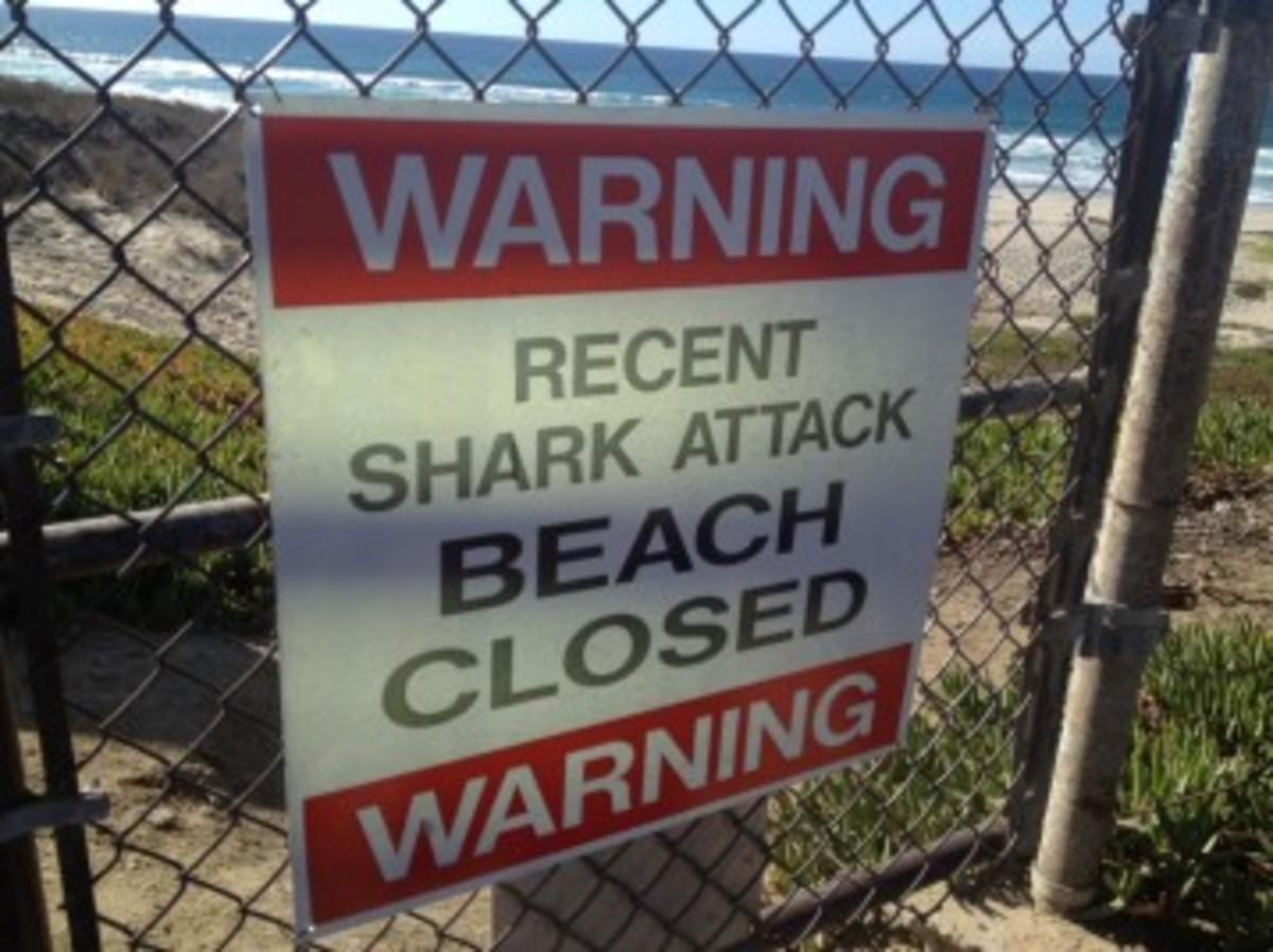 Ένας νεκρός από επίθεση καρχαρία! Τρόμος στη Σάντα Μπάρμπαρα | Newsit.gr