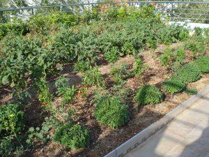 Ημερίδα για την επίδραση των φυτεμένων δωμάτων