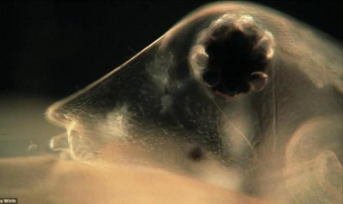 Αυτά τα «τέρατα» είναι μέσα στο νερό που πίνουμε. Σοκάρουν οι φωτογραφίες από μικροσκόπιο   Newsit.gr