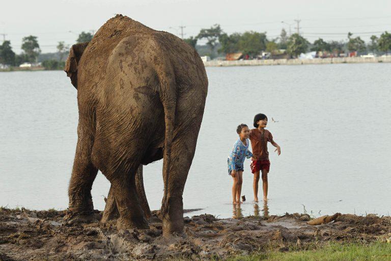 Οι πλημμύρες άφησαν «άστεγους» και τους ελέφαντες! | Newsit.gr