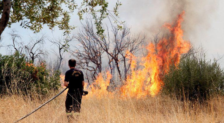 Yπό μερικό έλεγχο η φωτιά στη Θήβα | Newsit.gr
