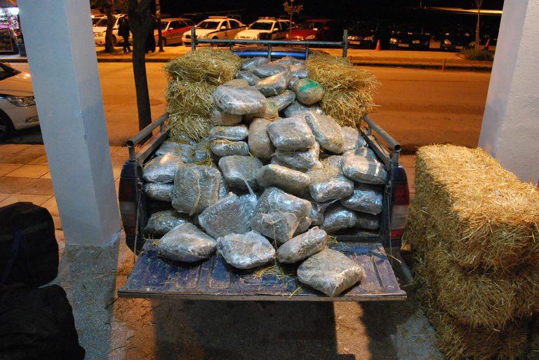 Θεσπρωτία: Τριφύλλι… για τρίφυλλα – Οι ζωοτροφές ήταν χασίς!   Newsit.gr