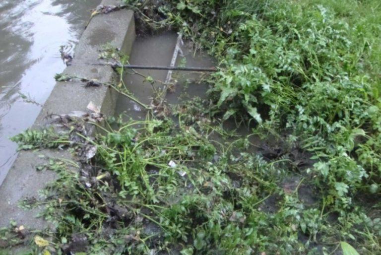 Γιατί οι πάπιες δεν μπορούν να σώσουν τον Ληθαίο ποταμό | Newsit.gr