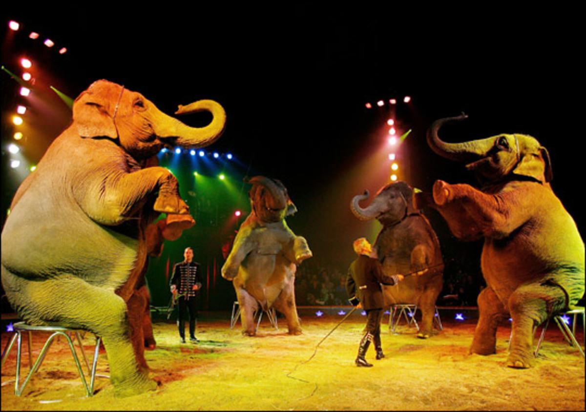 OXI στο Τσίρκο με ζώα… | Newsit.gr