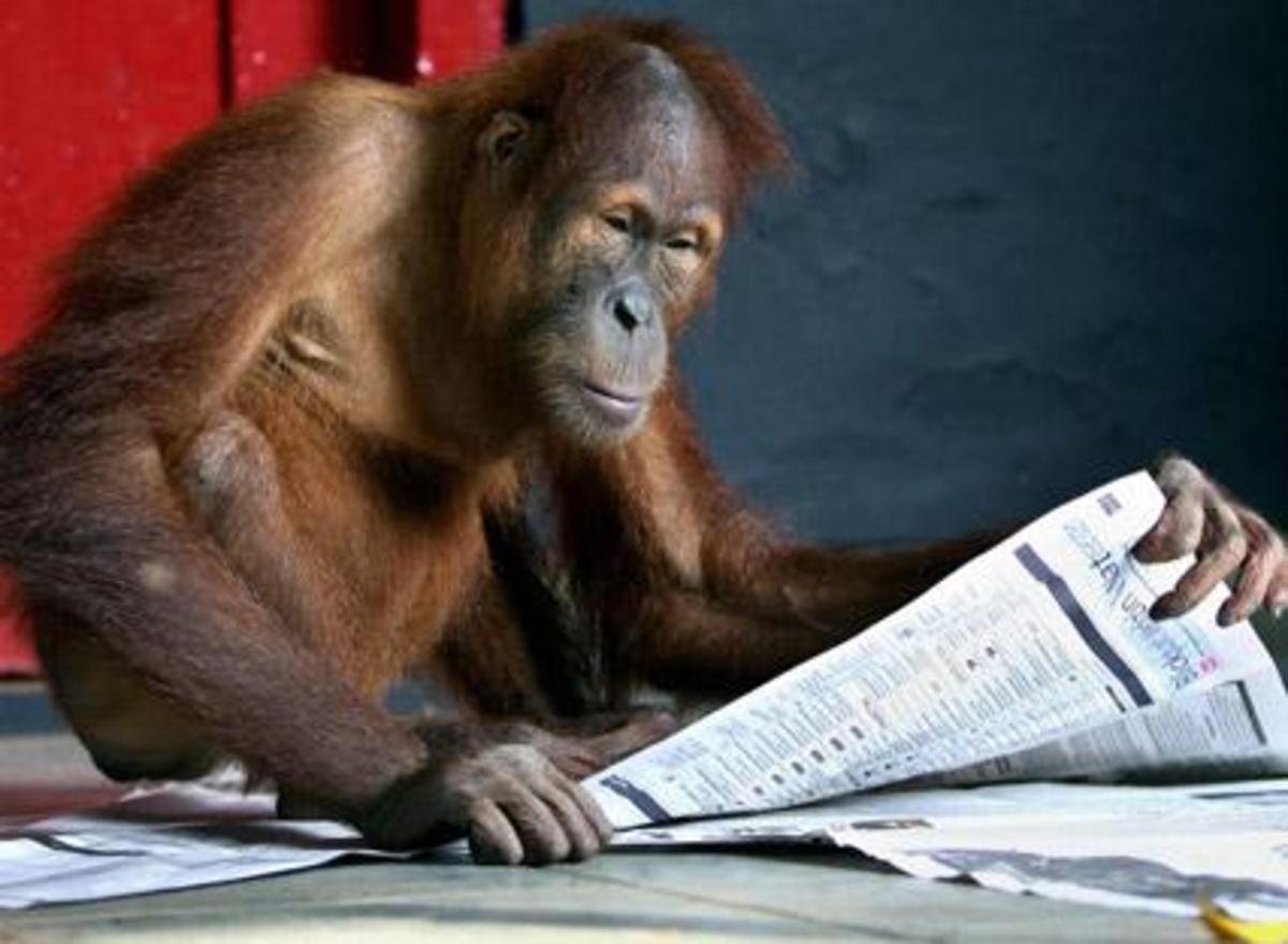 Νισάφι πια με την ανθελληνική προπαγάνδα του Spiegel – Ανακάλυψαν »Έλληνες» από το σκάνδαλο με τα παραχαραγμένα ευρω-νομίσματα!   Newsit.gr