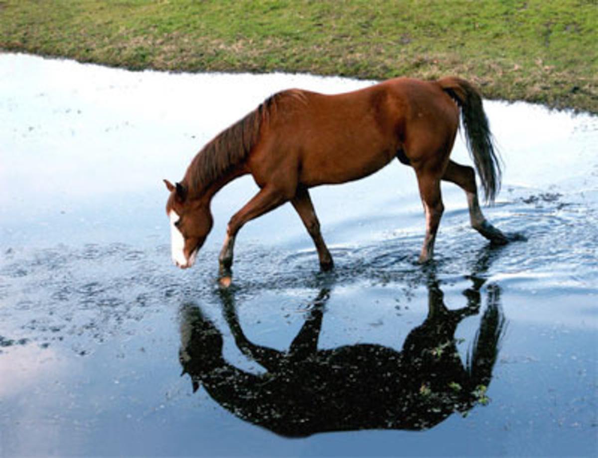 Βόλος: Η δραματική επιχείρηση διάσωσης αλόγου που έπεσε σε βόθρο!   Newsit.gr