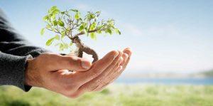 WIND: Το αποτύπωμα της στο περιβάλλον